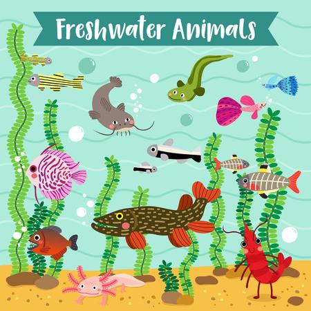 discus: Freshwater Animals cartoon with underwater background, Vector illustration.