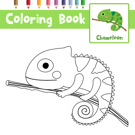 Coloring page of Chameleon on branch animals for preschool kids activity educational worksheet. Vector Illustration.