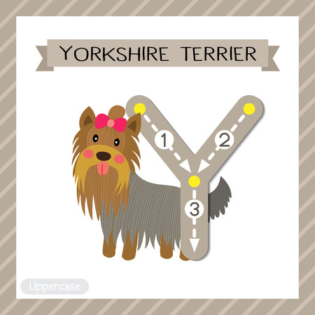 school: Letter Y uppercase cute children colorful zoo and animals ABC alphabet tracing flashcard of Yorkshire Terrier dog for kids learning English vocabulary and handwriting vector illustration.