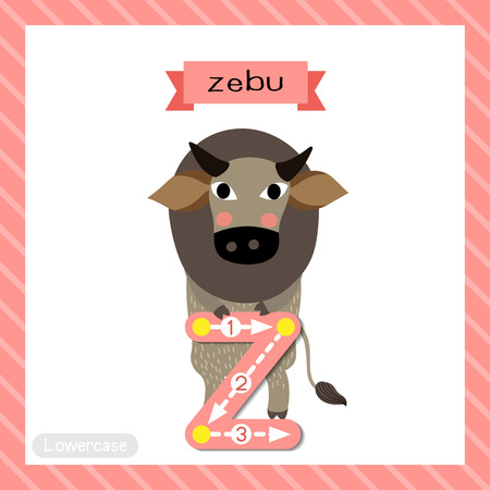Letter Z lowercase cute children colorful zoo and animals ABC alphabet tracing flashcard of Zebu standing on two legs for kids learning English vocabulary and handwriting vector illustration.