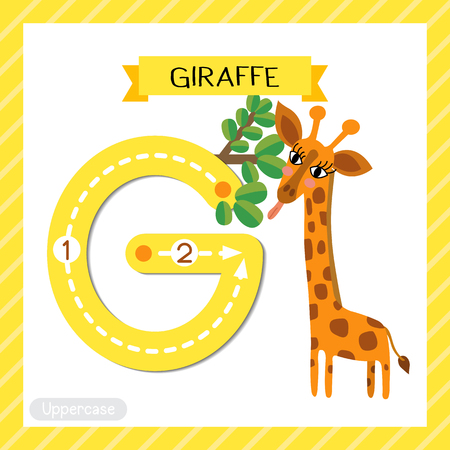 Letter G uppercase cute children colorful zoo and animals ABC alphabet tracing flashcard of Giraffe eating leaves for kids learning English vocabulary and handwriting vector illustration.
