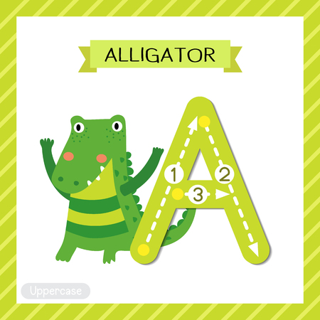 Letter A uppercase cute children colorful zoo and animals ABC alphabet tracing flashcard of Alligator for kids learning English vocabulary and handwriting vector illustration. Illustration