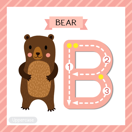 school: Letter B uppercase cute children colorful zoo and animals ABC alphabet tracing flashcard of Standing Bear  for kids learning English vocabulary and handwriting vector illustration.