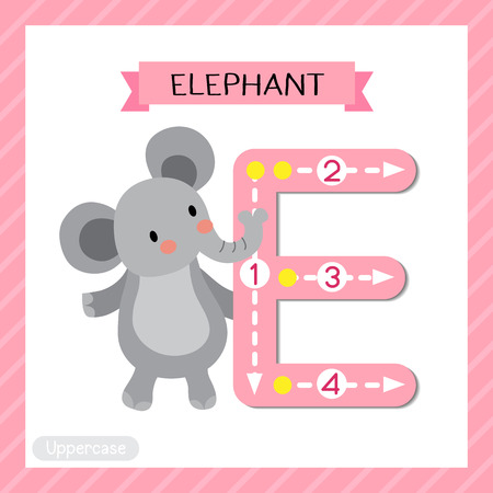 Letter E uppercase cute children colorful zoo and animals ABC alphabet tracing flashcard of Elephant standing on two legs for kids learning English vocabulary and handwriting vector illustration.