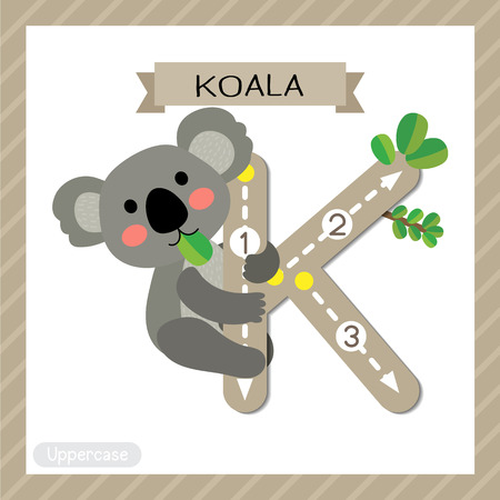 Letter K uppercase cute children colorful zoo and animals ABC alphabet tracing flashcard of Koala bear for kids learning English vocabulary and handwriting vector illustration.