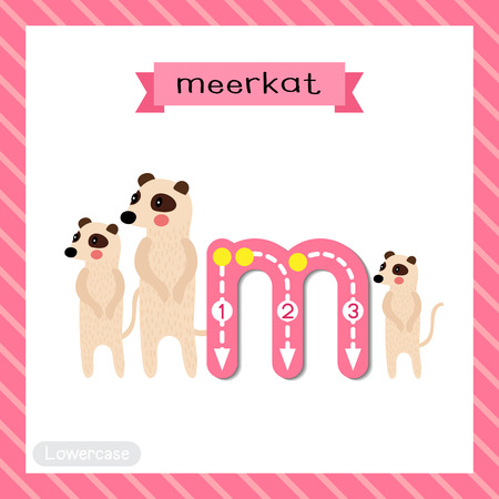 Letter M lowercase cute children colorful zoo and animals ABC alphabet tracing flashcard of Standing Meerkat family group for kids learning English vocabulary and handwriting vector illustration.