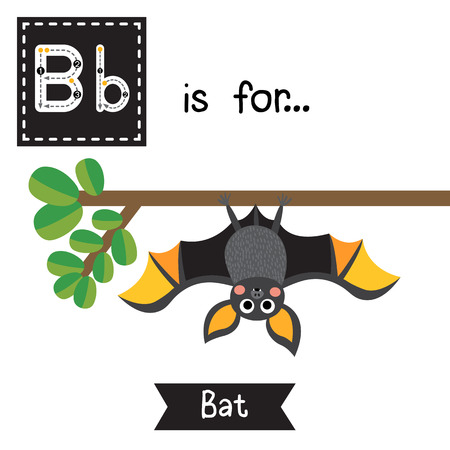 Cute children ABC alphabet B letter tracing flashcard of Bat roosting branch for kids learning English vocabulary in Happy Halloween Day theme.