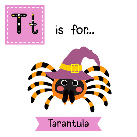 Cute children ABC alphabet T letter tracing flashcard of Tarantula with witch hat for kids learning English vocabulary in Happy Halloween Day theme. Illustration