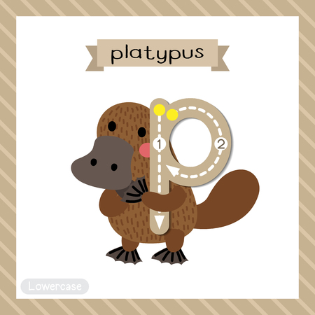 platypus: Letter P lowercase cute children colorful zoo and animals ABC alphabet tracing flashcard of Standing Platypus for kids learning English vocabulary and handwriting vector illustration.