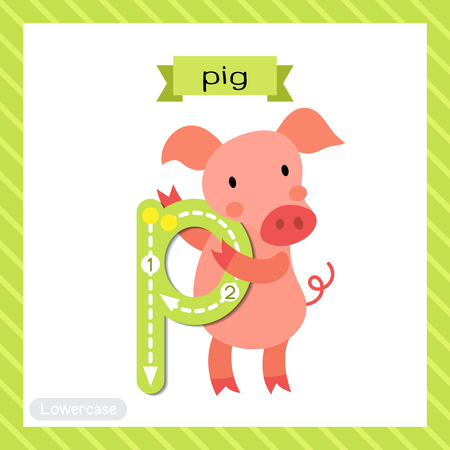 Letter P lowercase tracing flashcard of pig for kids learning English vocabulary and handwriting.