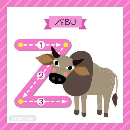 Letter Z uppercase cute children colorful zoo and animals ABC alphabet tracing flashcard of Zebu for kids learning English vocabulary and handwriting vector illustration. Illustration