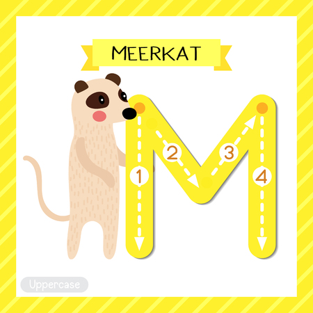 Letter M uppercase cute children colorful zoo and animals ABC alphabet tracing flashcard of Standing Meerkat for kids learning English vocabulary and handwriting vector illustration.