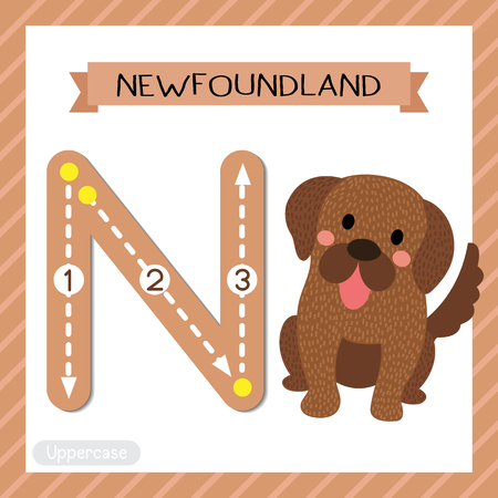 Letter N uppercase cute children colorful zoo and animals ABC alphabet tracing flashcard of Sitting Newfoundland dog for kids learning English vocabulary and handwriting vector illustration. Illustration