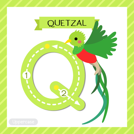 Letter Q uppercase cute children colorful zoo and animals ABC alphabet tracing flashcard of Flying Quetzal bird for kids learning English vocabulary and handwriting vector illustration. Illustration