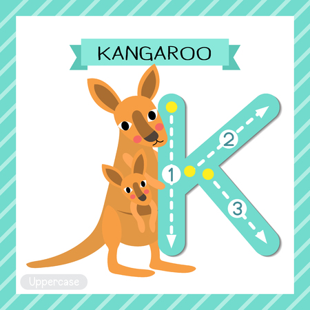 Letter K uppercase cute children colorful zoo and animals ABC alphabet tracing flashcard of Kangaroo and baby for kids learning English vocabulary and handwriting vector illustration.