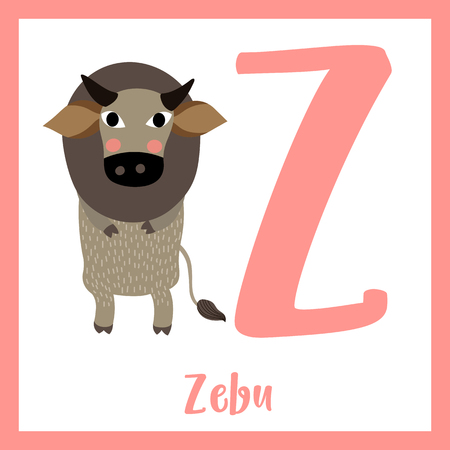 Cute children ABC animal zoo alphabet Z letter flashcard of Zebu standing on two legs for kids learning English vocabulary. Vector illustration. Illustration