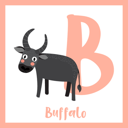 Cute children ABC animal zoo alphabet B letter flashcard of standing Buffalo for kids learning English vocabulary. Vector illustration.