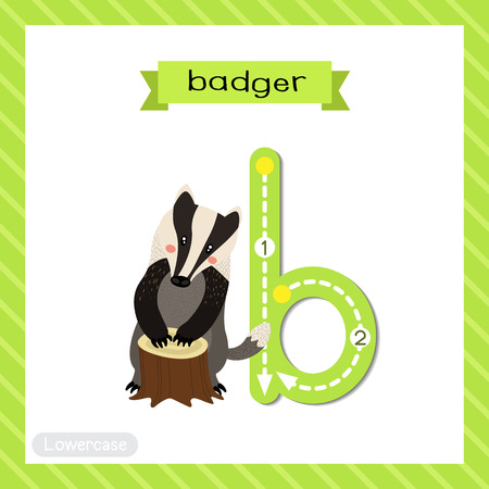 Letter B lowercase cute children colorful zoo and animals ABC alphabet tracing flashcard of Badger for kids learning English vocabulary and handwriting vector illustration.