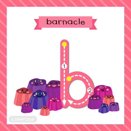 Letter B lowercase cute children colorful zoo and animals ABC alphabet tracing flashcard of Barnacle for kids learning English vocabulary and handwriting vector illustration.