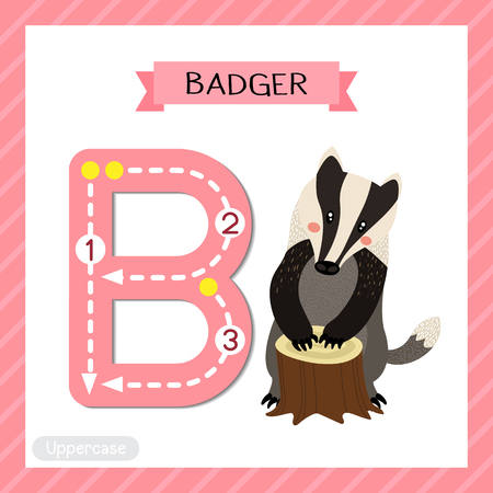 Letter B uppercase cute children colorful zoo and animals ABC alphabet tracing flashcard of Badger for kids learning English vocabulary and handwriting vector illustration.