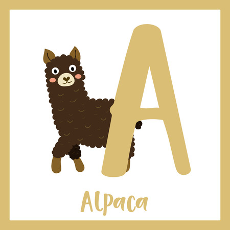 Cute children ABC animal zoo alphabet A letter flashcard of dark brown Alpaca for kids learning English vocabulary. Vector illustration.