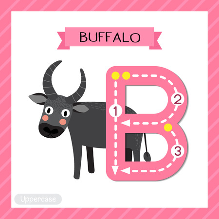 Letter B uppercase cute children colorful zoo and animals ABC alphabet tracing flashcard of Standing Buffalo for kids learning English vocabulary and handwriting vector illustration.