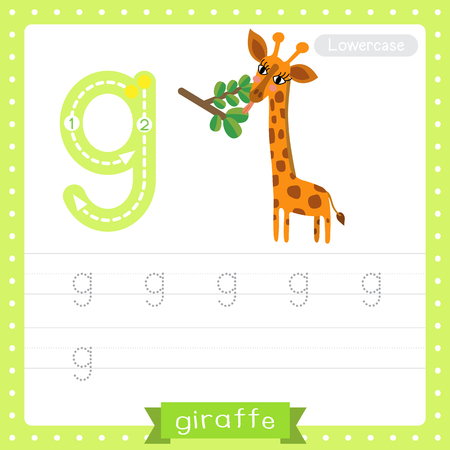 Letter G lowercase cute children colorful zoo and animals ABC alphabet tracing practice worksheet of Giraffe eating leaves for kids learning English vocabulary and handwriting vector illustration.