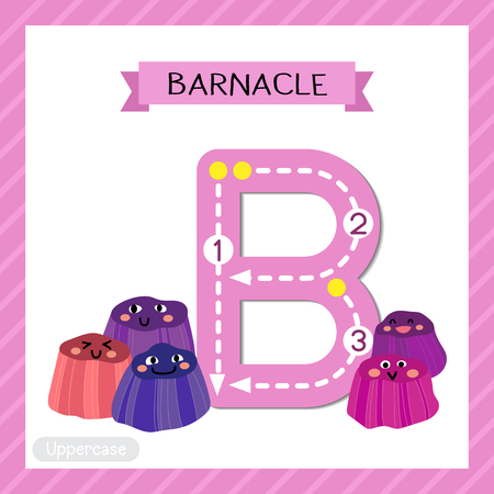 Letter B uppercase cute children colorful zoo and animals ABC alphabet tracing flashcard of Barnacle for kids learning English vocabulary and handwriting vector illustration.