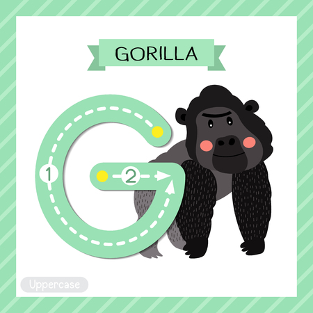 Letter G uppercase cute children colorful zoo and animals ABC alphabet tracing flashcard of Gorilla for kids learning English vocabulary and handwriting vector illustration.
