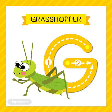 Letter G uppercase cute children colorful zoo and animals ABC alphabet tracing flashcard of Happy Grasshopper for kids learning English vocabulary and handwriting vector illustration.