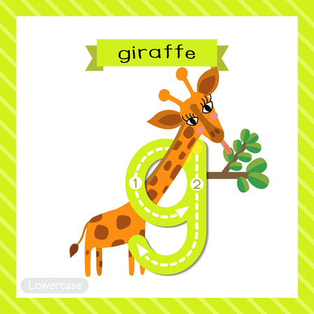 Letter G lowercase cute children colorful zoo and animals ABC alphabet tracing flashcard of Giraffe eating leaves for kids learning English vocabulary and handwriting vector illustration.