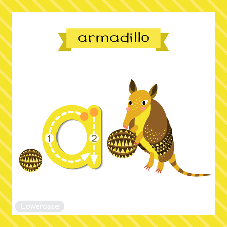 Letter A lowercase cute children colorful zoo and animals ABC alphabet tracing flashcard of Armadillo for kids learning English vocabulary and handwriting vector illustration.