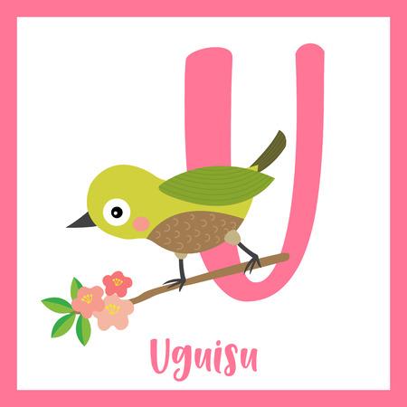 Cute children ABC animal zoo alphabet U letter flashcard of Uguisu bird perching on branch for kids learning English vocabulary. Vector illustration.