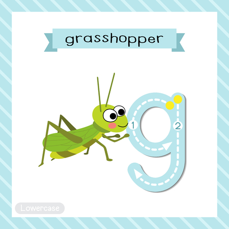 Letter G lowercase cute children colorful zoo and animals ABC alphabet tracing flashcard of Happy Grasshopper for kids learning English vocabulary and handwriting vector illustration.