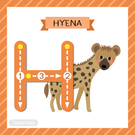Letter H uppercase cute children colorful zoo and animals ABC alphabet tracing flashcard of Hyena for kids learning English vocabulary and handwriting vector illustration. Illustration