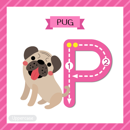 Letter P uppercase cute children colorful zoo and animals ABC alphabet tracing flashcard of Pug dog for kids learning English vocabulary and handwriting vector illustration.