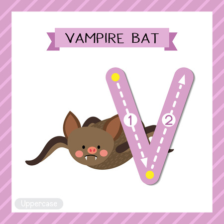 Letter V uppercase cute children colorful zoo and animals ABC alphabet tracing flashcard of Vampire Bat for kids learning English vocabulary and handwriting vector illustration.