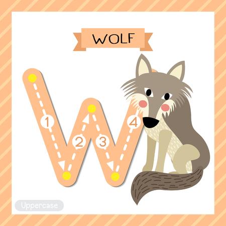 Lettre W majuscule enfants mignons zoo coloré et animaux ABC alphabet traçage flashcard de Wolf pour les enfants apprenant le vocabulaire anglais et l'illustration vectorielle de l'écriture manuscrite.