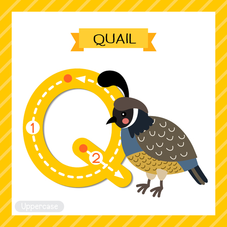 Letter Q uppercase cute children colorful zoo and animals ABC alphabet tracing flashcard of Quail bird for kids learning English vocabulary and handwriting vector illustration. Imagens - 125103078