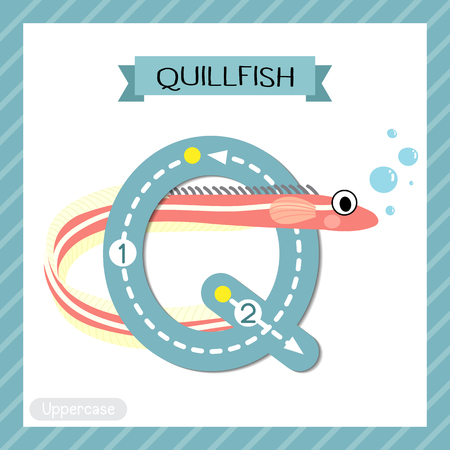 Letter Q uppercase cute children colorful zoo and animals ABC alphabet tracing flashcard of Quillfish for kids learning English vocabulary and handwriting vector illustration. Vettoriali