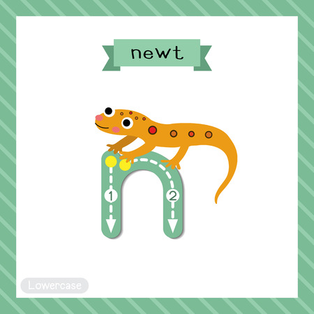 Letter N lowercase cute children colorful zoo and animals ABC alphabet tracing flashcard of Eastern Red-spotted Newt for kids learning English vocabulary and handwriting vector illustration. Vektoros illusztráció