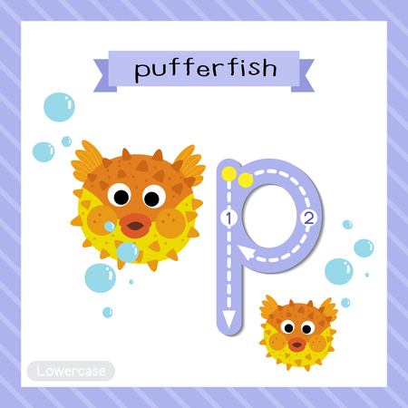 Letter P lowercase cute children colorful zoo and animals ABC alphabet tracing flashcard of Pufferfish for kids learning English vocabulary and handwriting vector illustration.