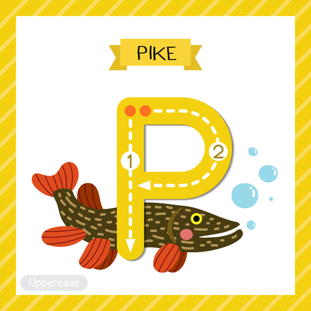 Letter P uppercase cute children colorful zoo and animals ABC alphabet tracing flashcard of Pike fish for kids learning English vocabulary and handwriting vector illustration.