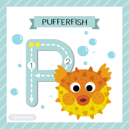 Letter P uppercase cute children colorful zoo and animals ABC alphabet tracing flashcard of Pufferfish for kids learning English vocabulary and handwriting vector illustration.