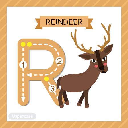 Letter R uppercase cute children colorful zoo and animals ABC alphabet tracing flashcard of Standing Reindeer for kids learning English vocabulary and handwriting vector illustration.