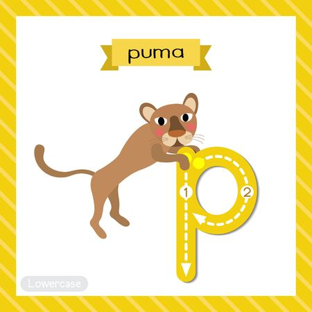 Letter P lowercase cute children colorful zoo and animals ABC alphabet tracing flashcard of Jumping Puma for kids learning English vocabulary and handwriting vector illustration. Ilustracja