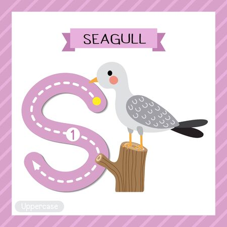Letter S uppercase cute children colorful zoo and animals ABC alphabet tracing flashcard of Seagull bird perching branch for kids learning English vocabulary and handwriting vector illustration.
