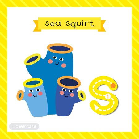 Letter S lowercase cute children colorful zoo and animals ABC alphabet tracing flashcard of Sea Squirt for kids learning English vocabulary and handwriting vector illustration.
