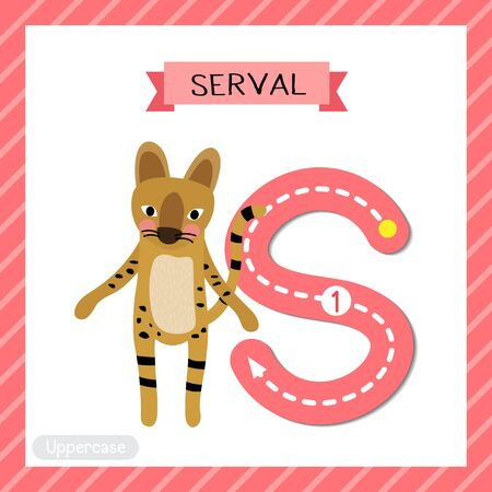 Letter S uppercase cute children colorful zoo and animals ABC alphabet tracing flashcard of Serval Cat for kids learning English vocabulary and handwriting vector illustration. Illustration