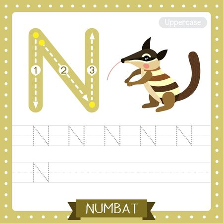 Letter N uppercase cute children colorful zoo and animals ABC alphabet tracing practice worksheet of Numbat for kids learning English vocabulary and handwriting vector illustration.
